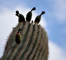 Cloudy day saguaro by nonamecat