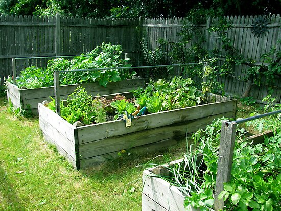 My veg garden 3/5 done. by evon ski