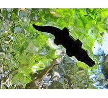 Alligator from below! Photographic Print