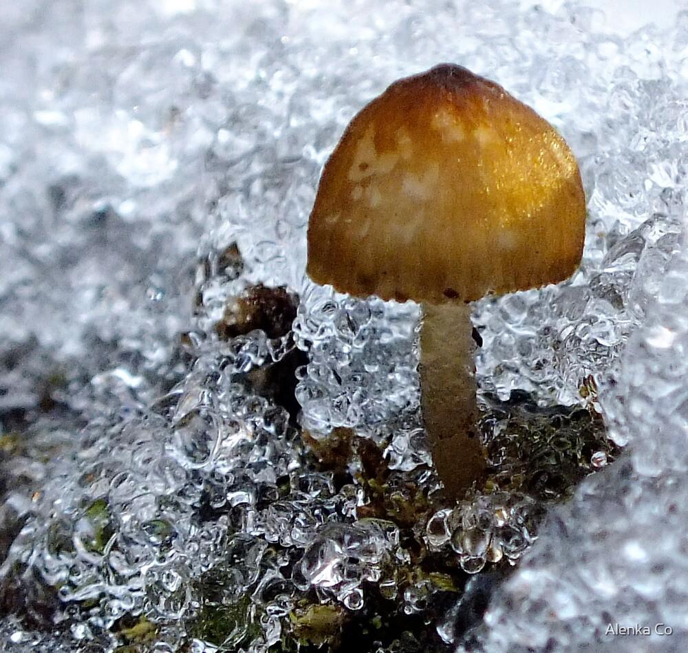 fungi on ice by Alenka Co