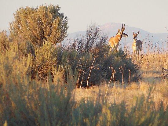 Antelope Pair by BrianAShaw