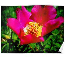 Little Textured Flower Poster