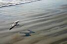 Flying over the Beach - Port Aransas Texas by Debbie Pinard