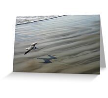 Flying over the Beach - Port Aransas Texas Greeting Card