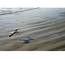 Flying over the Beach - Port Aransas Texas Photographic Print