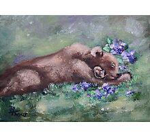 Sleeping Buddies II Bear and Mouse Photographic Print