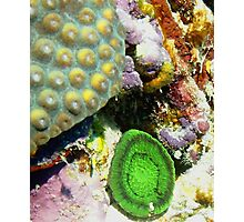 Emerald Green Artichoke Anemone on Coral Reef Wall Photographic Print