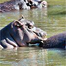 I JUST LOVE MY MOM! *Hippopotamus amphibious* SEEKOEI  by Magriet Meintjes