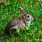 My Backyard baby bunny by Choux