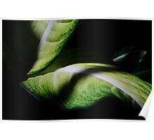 Captivating Curves ! Poster