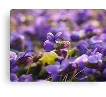 Violets - Flowers Canvas Print