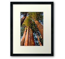 Three and One Framed Print