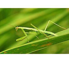 Green Beauty Photographic Print