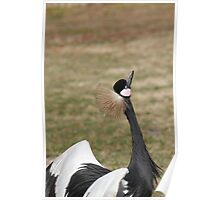 Crane Ready to Feed Poster