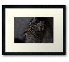 Stray Cat Framed Print