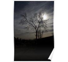 Moonlight Tree Poster