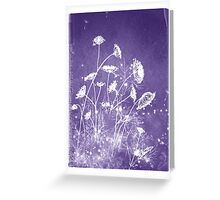 Queen Anne's Lace 15 Greeting Card