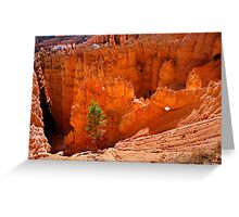Pines in Bryce Canyon Greeting Card