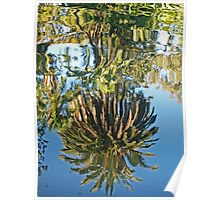 Reflected Tree Poster