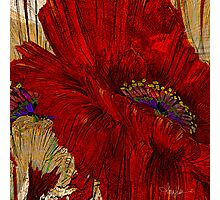 The Passion of Poppies Photographic Print