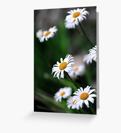 daisy select.. Greeting Card
