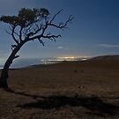 Lonely Midnight Tree by pablosvista2