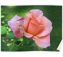 """Sunset Celebration"" Rose Poster"