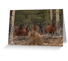 Wild Horses - Ghost Forest Greeting Card