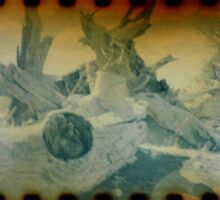 Treedium Sticker