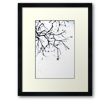 :The Branch: Framed Print