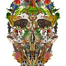 Ancient Skull by Boserup