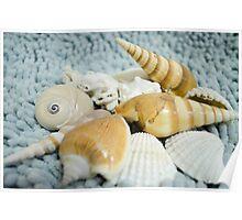 Seashells! Poster