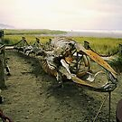 Right Whale Skeleton by debidabble