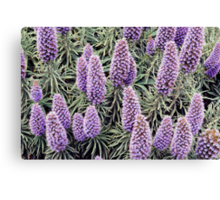 Lupin Heaven Canvas Print