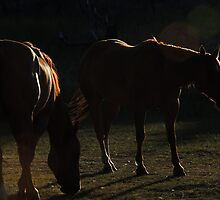 Equine in Silhouette by BettyEDuncan