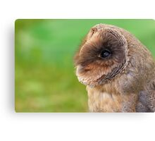 Black Barn Owl Canvas Print