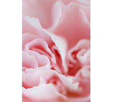 Pink Swirls Photographic Print