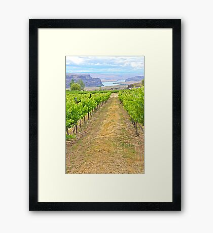 Columbia River through the Vines, Washington State Framed Print