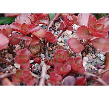 Two Types Of Life In Harmony Photographic Print