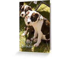 Staffies Puppys Happy Birthday Greeting Card