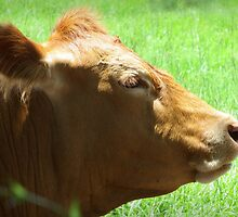 Bovine Profile by AuntDot