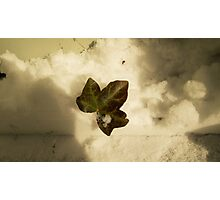 A Leaf in the Clouds Photographic Print