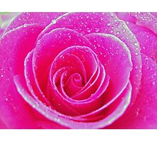 Pink Rose with Dew Drops Photographic Print
