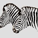 Two Zebra by Paul Fearn