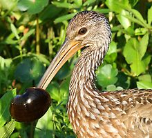 A Limpkin with its catch ! by jozi1