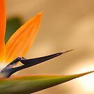 Afrcan Flower by Mandy Fell
