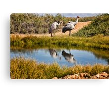 Brolgas reflections Canvas Print