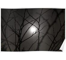 Moonlight through trees Poster
