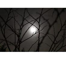 Moonlight through trees Photographic Print