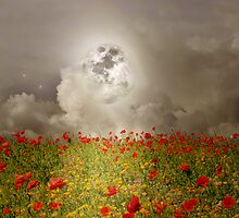 Poppies by Moonlight by Christine Lake